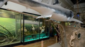 See a Great White Shark at the National Museum